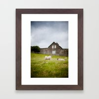 Sheep blown by the wind Framed Art Print