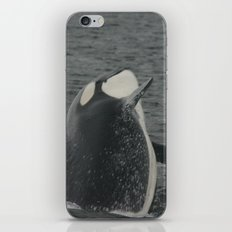 Orca Whale iPhone & iPod Skin