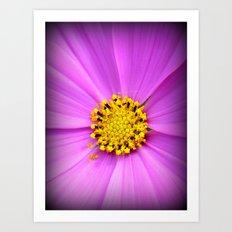 Purple flower and pollen close up. Art Print