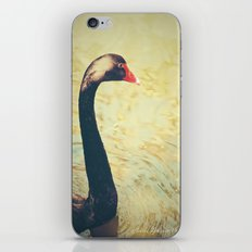 Black Swan iPhone & iPod Skin