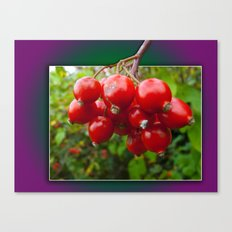 Woodland berries in the frame Canvas Print