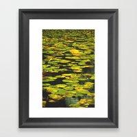 Water Lilly  Framed Art Print