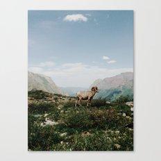 Bighorn Overlook Canvas Print