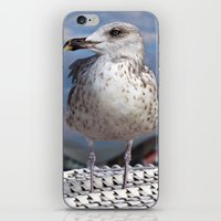 LIBERTY on the BALTIC SEA iPhone & iPod Skin