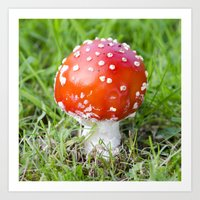 Fly Agaric Square Art Print
