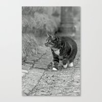 The cat in the alley Canvas Print