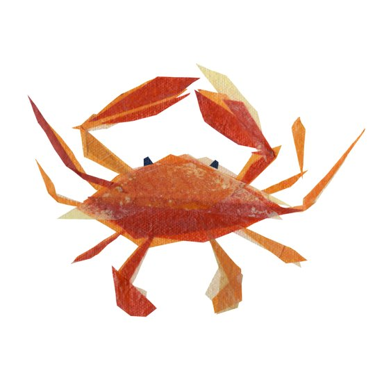 Clementine Crab Canvas Print