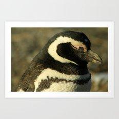 Penguin of Magellan Art Print