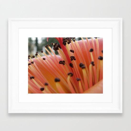 Red flower #1 Framed Art Print