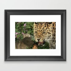 AMUR Framed Art Print