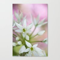 Wild Garlic Canvas Print