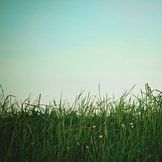 The Grass Is Greener Here  Art Print