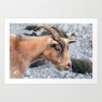 Beige Goat portrait 8149 Art Print