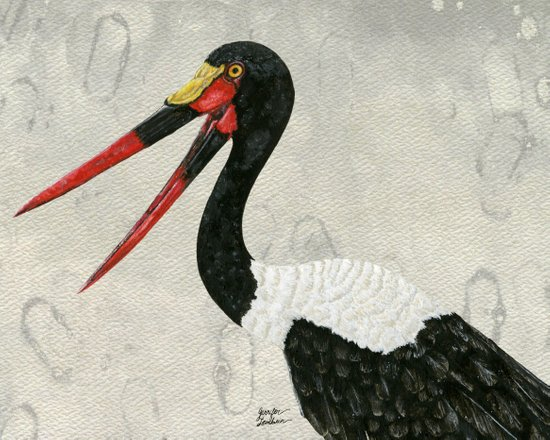 Saddle-billed Stork Quinn 2 Art Print