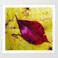 Bright Fall Leaves Art Print