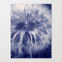 blue dandelion I Canvas Print