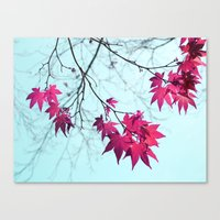 Maple Tree Stars Canvas Print