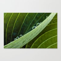 composition of water Canvas Print