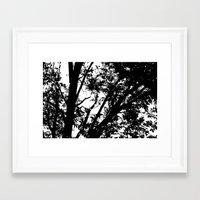 Pecan Tree Silhouette Framed Art Print