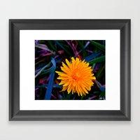 Dandelion Of All Colors Framed Art Print