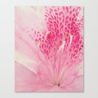 Pink Azalea Canvas Print