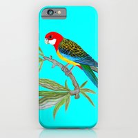 iPhone Cases featuring golden-mantled rosella by giol's