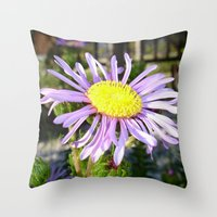 Close Up of A Violet Aster Flower Spring Bloom  Throw Pillow