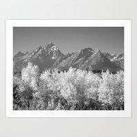 White Trees Art Print