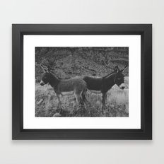 Peach Burros Framed Art Print