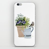 Pansies in a pot iPhone & iPod Skin