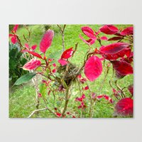 Mini Bird's Nest Canvas Print