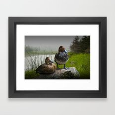 Canvasback Duck Pair by a Pond Framed Art Print