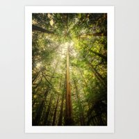 Forest Tree Tops Art Print