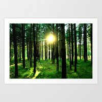 Secret Forest Art Print
