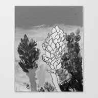 Alpinia Purpurata – Re… Canvas Print