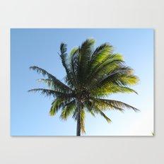 Palm Canvas Print