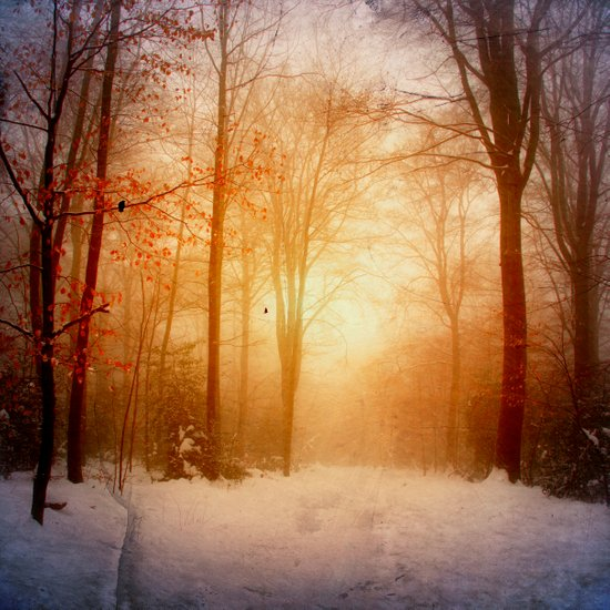 warm wintEr glOw Art Print