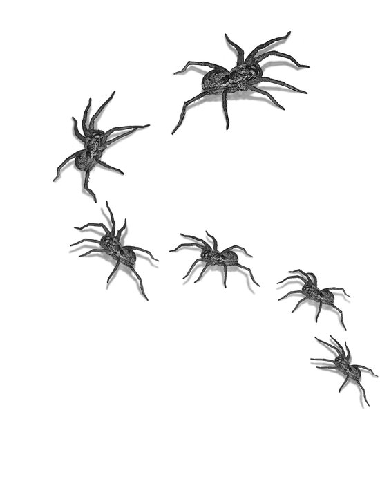 Wolf Spiders Art Print