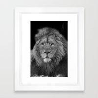 Asiatic Lion Framed Art Print