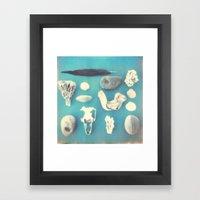Beachcomber's collection Framed Art Print
