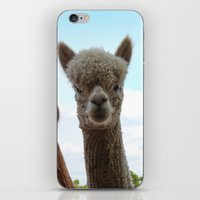 Alpaca iPhone & iPod Skin