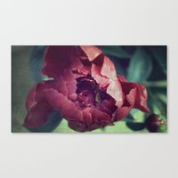Peony Red Flower Canvas Print