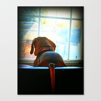 How Much Is That Doggie … Canvas Print