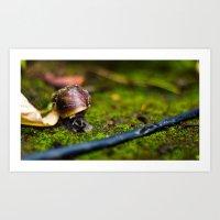 At A Snail's  Pace Art Print