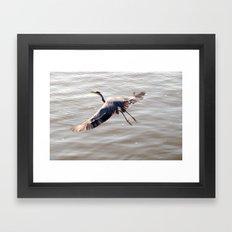 a great Blue Heron Framed Art Print