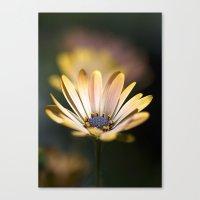 daisies in a row. Canvas Print