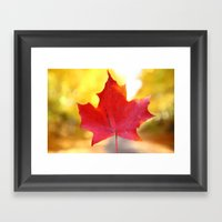 Red Maple Leaf Framed Art Print