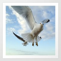 Gull Closeup Art Print