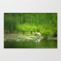 Marsh Egret 2 Canvas Print