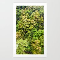 Itsukushima Forest Art Print